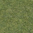 Texture 307: Grass lawn 1500 x 1500 px proof