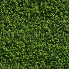 Texture 314: Green Wall Foliage