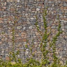 Stone texture 010: Gabion wall with creeping ivy