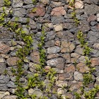 Stone texture 010: Gabion wall with creeping ivy 100% proof (9000px)